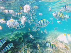 I colori della Thailandia sono magnifici 😍 Thailand Travel, Thailand Adventure, Phi Phi Island, Krabi, Snorkeling, Land Scape, Savage, Beach Landscape, Travel Trip