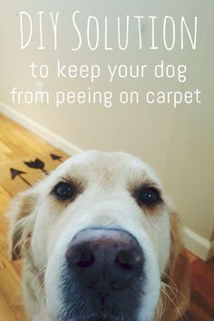 Did you know that dogs tend to return to places that have a urine odor?