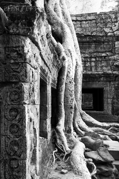Temples of Angkor. by ap.