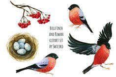 Bullfinch and Rowan clipart set - Illustrations - 2