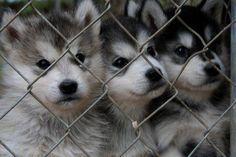 adorable pups 2 Surprise Weekend Awww! (34 photos)