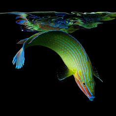 Colors of the Deep. Click image to see more. Bright Neon Portraits of Exotic Life Underwater - My Modern Metropolis