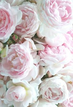 Pink and White Flowers ♥Manhattan Girl