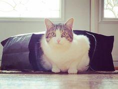 Reposting @jeanboileau: Quand le #chat sort du sac #fandewhiskylechat #instacat #instamood #cat #chats