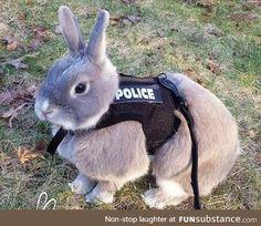 Officer Bunner Reporting for Duty!