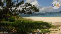 Beachfront Lot and Coconut Farm For Sale in  Dinadiawan Near Baler