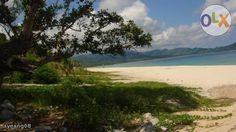 Beachfront Lot and Coconut Farm For Sale in  Dinadiawan Near Baler