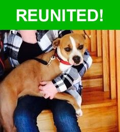 Great news! Happy to report that Zena has been reunited and is now home safe and sound! :)