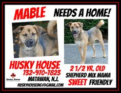 Mable the #shepherd mix was to spend the rest of her life with you!