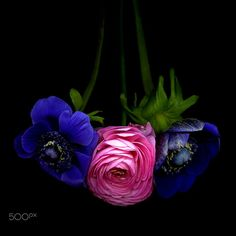 WELL ESCORTED… Spring Flowers… by Magda Indigo on 500px