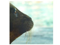 Harbor Seal Staring At The Sea Ocean by machelspencePHOTO on Etsy, $6.99