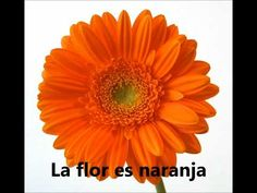 Los colores en español: This YouTube playlist is bright with colors!