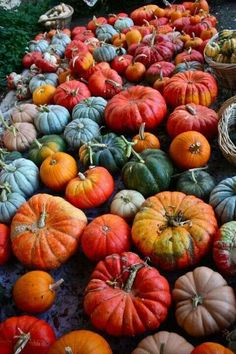 The weird and the wonderful of the genus world known as Cucurbita (squash/pumpkins! Harvest Time, Fall Harvest, Bountiful Harvest, Autumn Aesthetic, Happy Fall Y'all, Samhain, Mabon, Autumn Inspiration, Fall Pumpkins