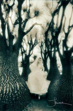 Joe Buissink - portfolio - portfolio - gallery-1 - 19