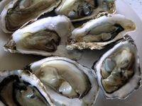 Classification des huîtres