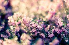 Beautiful Flowers For Desktop Wallpapers Hd Free Pretty Flowers