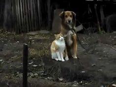 愛があれば人目なんて。 ダンディな犬とベタボレの猫の甘いひとときを覗き見 – grape -「心」に響く動画メディア