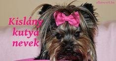 Kislány kutya nevek ABC szerint - Állatnevek Crochet Hats, Knitting Hats