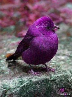 purple, bird, and nature image Kinds Of Birds, All Birds, Little Birds, Love Birds, Pretty Birds, Beautiful Birds, Animals Beautiful, Animals Amazing, Simply Beautiful