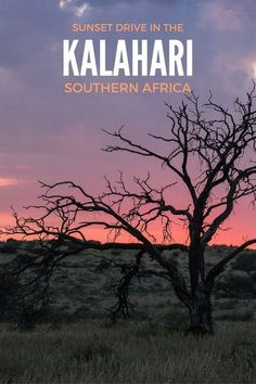 Sunset drive in the Kgalagadi Transfrontier Park, Kalahari, Southern Africa Uganda Travel, Africa Travel, Travel Guides, Travel Tips, Madagascar Travel, Provinces Of South Africa, African Safari, Travel Photographer, Travel Inspiration