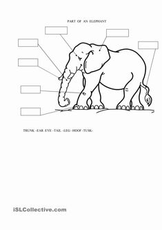 Parts of an Elephant Vocabulary, English parts of an