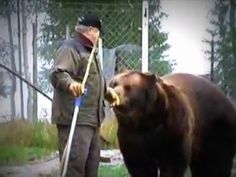 Bear Man Of Finland Has An Unbreakable Bond With Brown Bears - YouTube