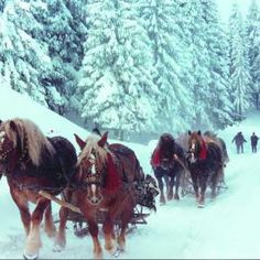 winter in Bucovina