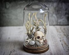 Skull Sea Beach Ocean Starfish Seashell Nautical Diorama Decor GLASS Dome Miniature PRE ORDER