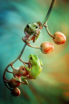 # frog friends by Vianz