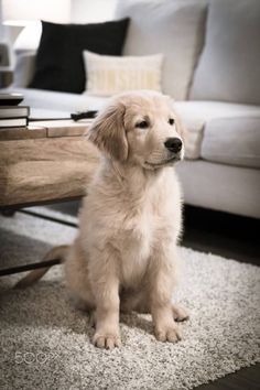 "lescoupsdecoeurdetara: ""*500px "" ==>http://www.amazingdogtales.com/gifts-for-golden-retriever-lovers/"
