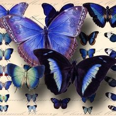 A digital collage sheet of antique blue butterflies,all at least 100 years old & perfect for fairy wings & other altered art projects. Beautiful Bugs, Beautiful Butterflies, Butterfly Kisses, Blue Butterfly, Morpho Butterfly, Vladimir Kush, Josephine Wall, Butterfly Illustration, Thomas Kinkade