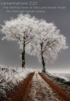 Best collection of most beautiful tree images free HD. Real and most beautiful tree pictures from around the world. Beautiful World, Beautiful Places, Beautiful Pictures, Beautiful Scenery, Beautiful Sunset, Amazing Places, Beautiful Flowers, Snow Scenes, Winter Scenes
