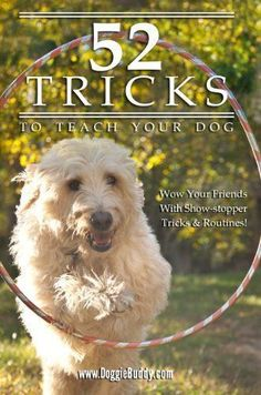 52 Tricks to Teach Your Dog Who says you can't teach an old dog new tricks? Here are 52 tricks you can teach to your Read more http://dogpoundspot.com/52-tricks-to-teach-your-dog/ Visit http://dogpoundspot.com for more dog review products