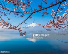 Stock Photo : Mt. Fuji and Cherry blossoms