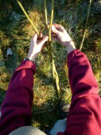 How to Build a Willow Fence Panel Permaculture magazine Willow