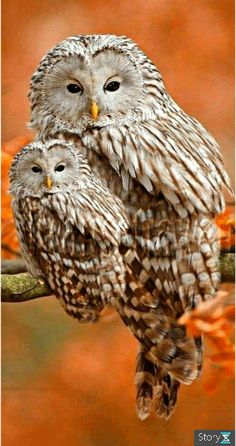 31 super ideas de pintura de aves rapaces - 31 super ideas de pintura de aves rapaces Informationen zu 31 super ideas bird of prey painting Pin - Beautiful Owl, Animals Beautiful, Cute Animals, Simply Beautiful, Owl Photos, Owl Pictures, Cute Birds, Pretty Birds, Cute Owl