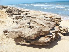 Washington Oaks State Park in Palm Coast, FL, is a real hidden gem and a treasure of the First Coast. Covered in stunning rock sculptures, it features the largest collection of coquina rock outcropping on the Atlantic Ocean. Palm Coast Florida, Florida Girl, Visit Florida, Florida Vacation, Florida Travel, Florida Beaches, Vacation Spots, Travel Usa, Florida Usa