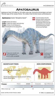 Learn about the Jurassic-era plant eating dinosaur Apatosaurus.