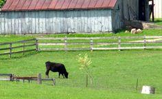 Ohio on the farm