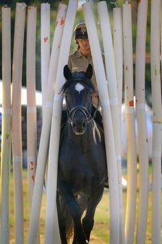 Police horses competing on an obstacle course - awesome!