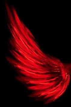 Alado en rojo...