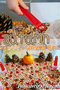 A fun Autumn Sensory Bin to help build fine motor skills! For related pins and resources follow https://www.pinterest.com/angelajuvic/autism-special-needs/
