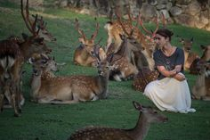 Meet the Nara Deers - Waiting for sunset with the deers