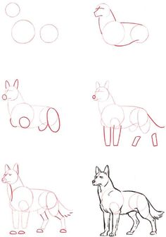 🌸~Credits to the artist, amazing wolf drawing tutorial~🌸 Drawing Skills, Drawing Techniques, Drawing Tips, Drawing Sketches, Painting & Drawing, Drawing Ideas, Dog Drawing Tutorial, Drawing Drawing, Dog Drawing Easy