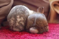 Round fuzzy bunny bums - May 19, 2012