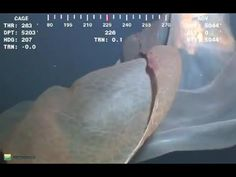 Do you believe that an actual Giant Sea Creature was caught on tape?  Click the play button to find out.