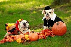 Happy Thanksgiving Day! From our friends at Butler @butleru - An oldie but a goodie to wish our Butler Family a happy Thanksgiving on behalf of @ButlerBlue3 and the late @ButlerBlue2. #TBT #GoDawgs #goviewyou