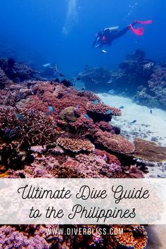 Ready to dive into the clear blue waters of the Philippines? This guide is all you need to help you get ready for your dive vacation to the Philippines! Get the best tips and advice from a local Filipina scuba diver! Get travel information and recommendations when it comes to diving in the Philippines. #scuba #scubadiving #explorephilippines #wowphilippines #scubadive #scubadiverslife #scubatravel #scubaphotography #seacritters #travelguide #travel #philippines #itsmorefuninthePhilippines Adventure Bucket List, Adventure Travel, Scuba Travel, Animal Experiences, Best Scuba Diving, Philippines Travel, Most Beautiful Beaches, Travel Activities, Underwater World