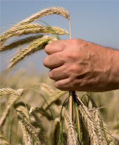 ventajas agricultura ecológica Bilbao, Organic Farming