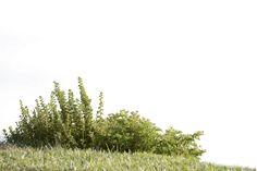 plants Collection by Irina-Ponochevnaya on DeviantArt – tree Photoshop Elements, Photoshop Rendering, Photoshop Images, Architecture Concept Drawings, Architecture Graphics, Architecture Visualization, Coupes Architecture, Image Resources, Collage Techniques